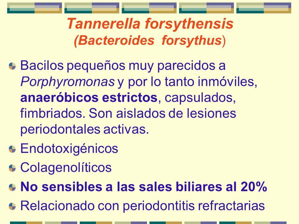 Tannerella forsythensis (Bacteroides forsythus)