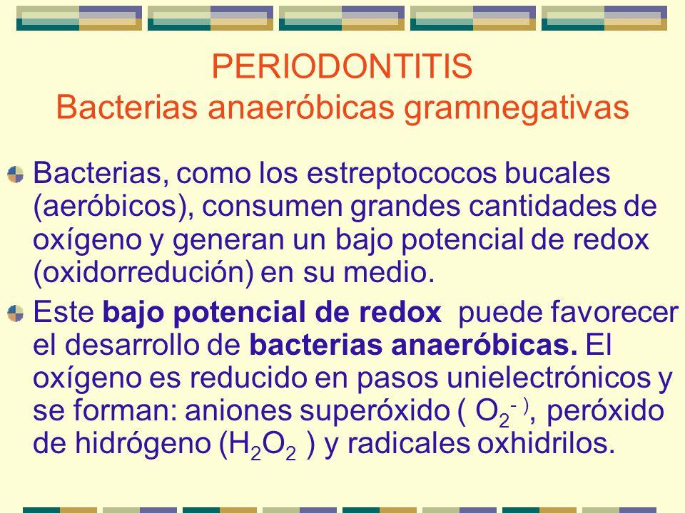 PERIODONTITIS Bacterias anaeróbicas gramnegativas