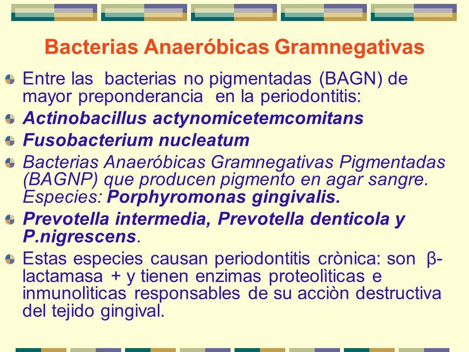 Bacterias Anaeróbicas Gramnegativas
