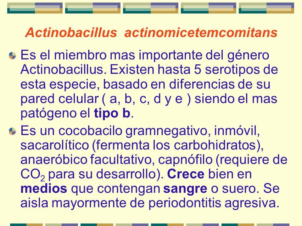 Actinobacillus actinomicetemcomitans