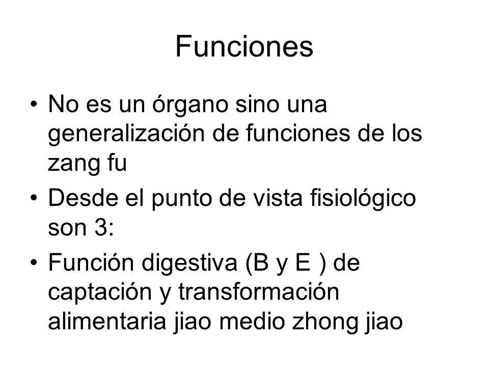 Funciones No es un órgano sino una generalización de funciones de los zang fu. Desde el punto de vista fisiológico son 3: