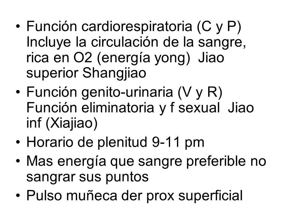 Función cardiorespiratoria (C y P) Incluye la circulación de la sangre, rica en O2 (energía yong) Jiao superior Shangjiao