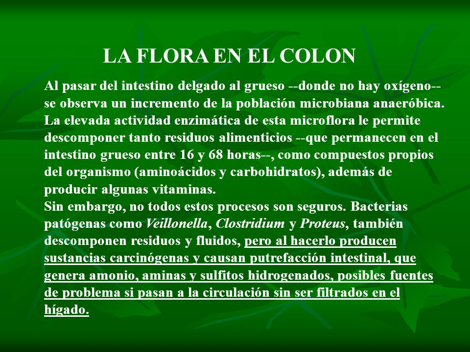 LA FLORA EN EL COLON