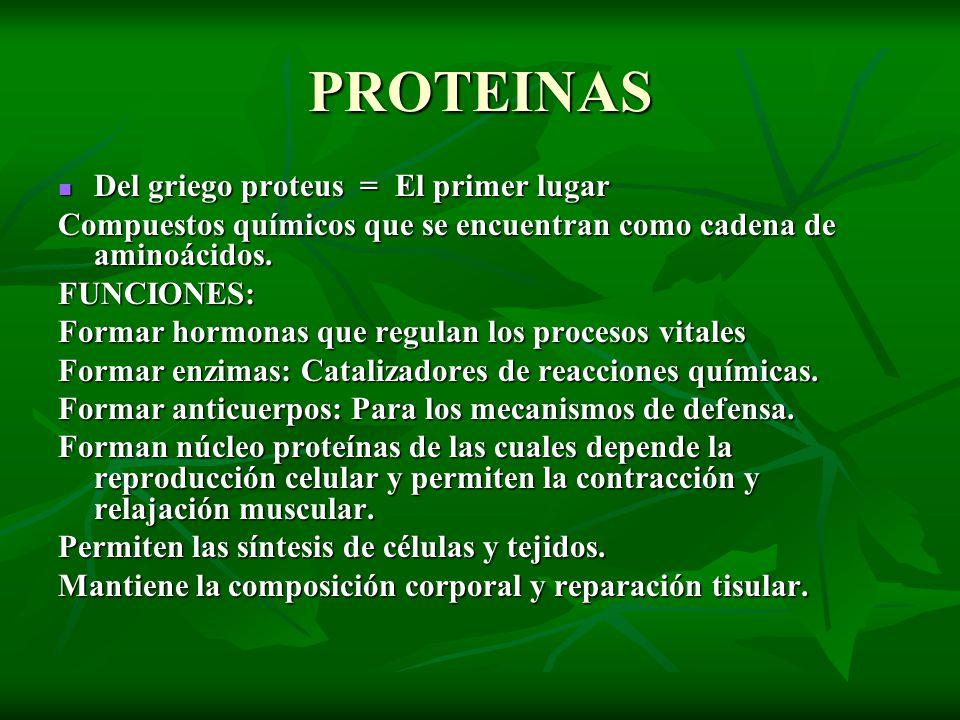 PROTEINAS Del griego proteus = El primer lugar