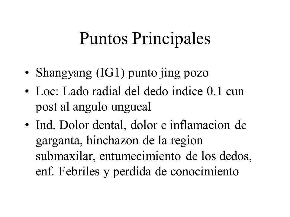 Puntos Principales Shangyang (IG1) punto jing pozo
