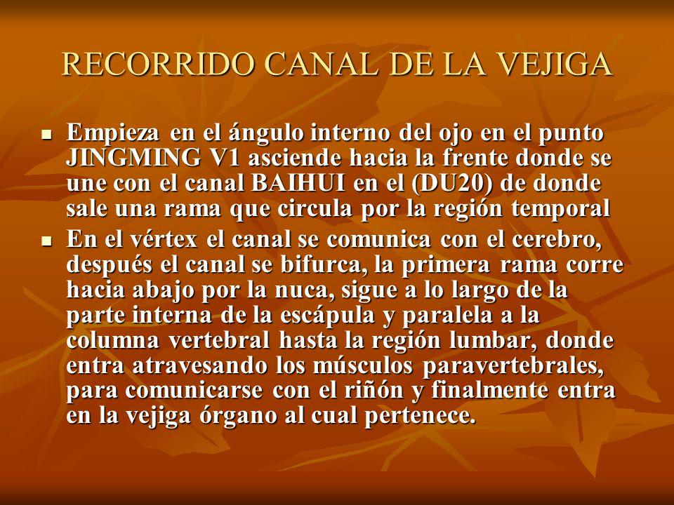 RECORRIDO CANAL DE LA VEJIGA
