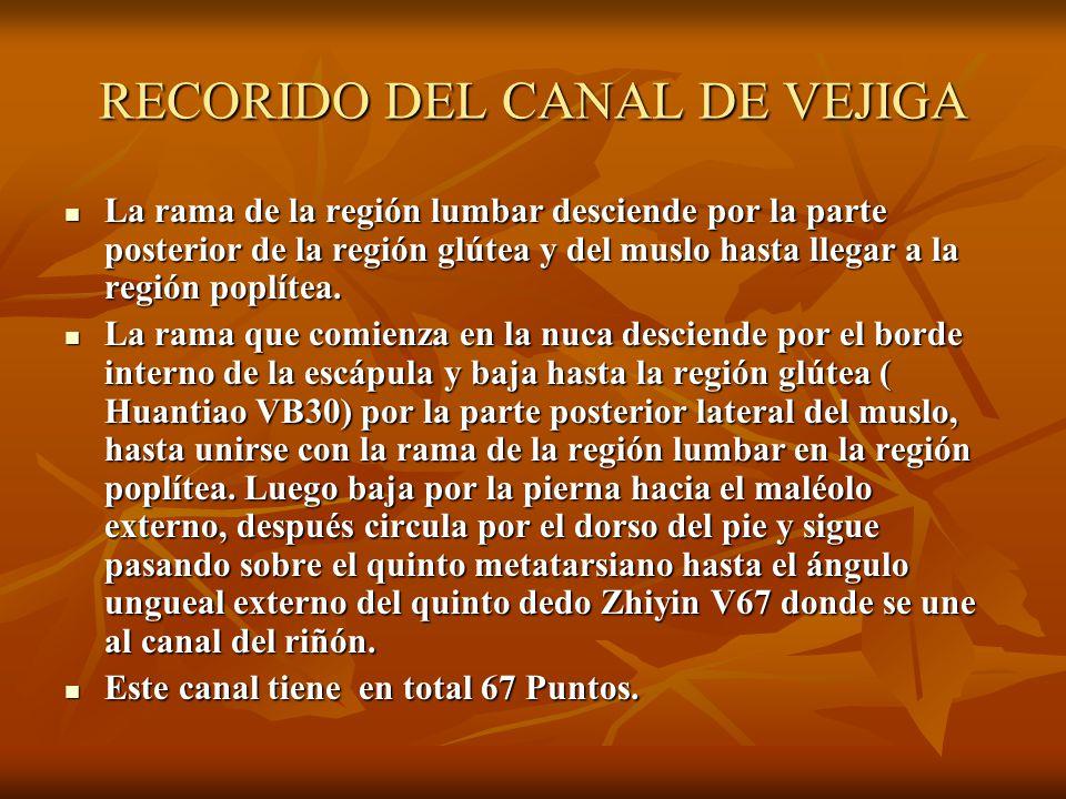 RECORIDO DEL CANAL DE VEJIGA