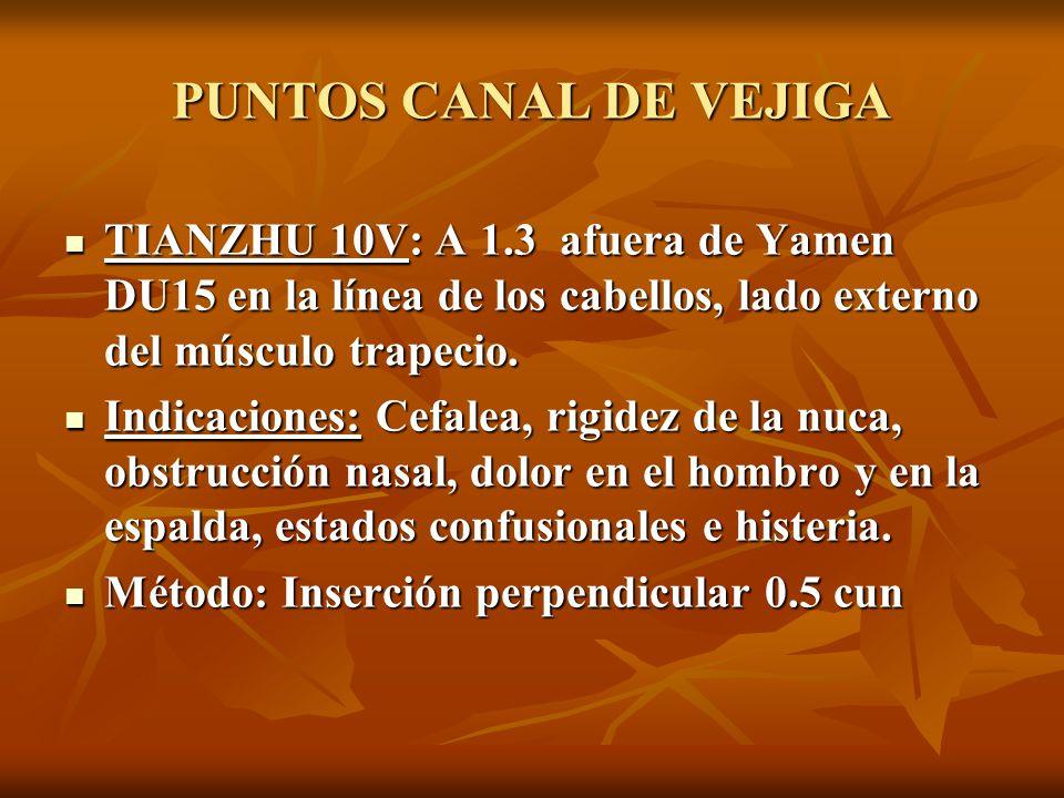 PUNTOS CANAL DE VEJIGA TIANZHU 10V: A 1.3 afuera de Yamen DU15 en la línea de los cabellos, lado externo del músculo trapecio.
