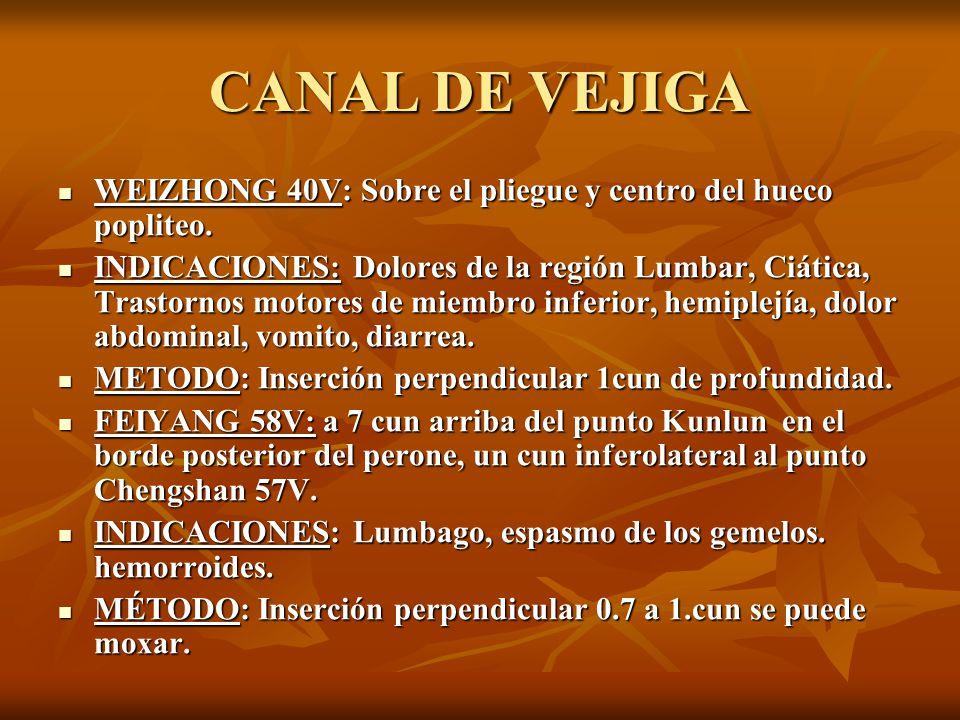 CANAL DE VEJIGA WEIZHONG 40V: Sobre el pliegue y centro del hueco popliteo.