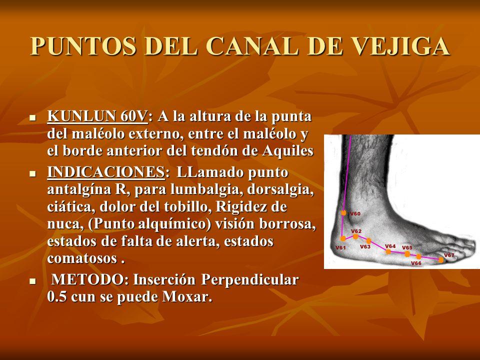 PUNTOS DEL CANAL DE VEJIGA