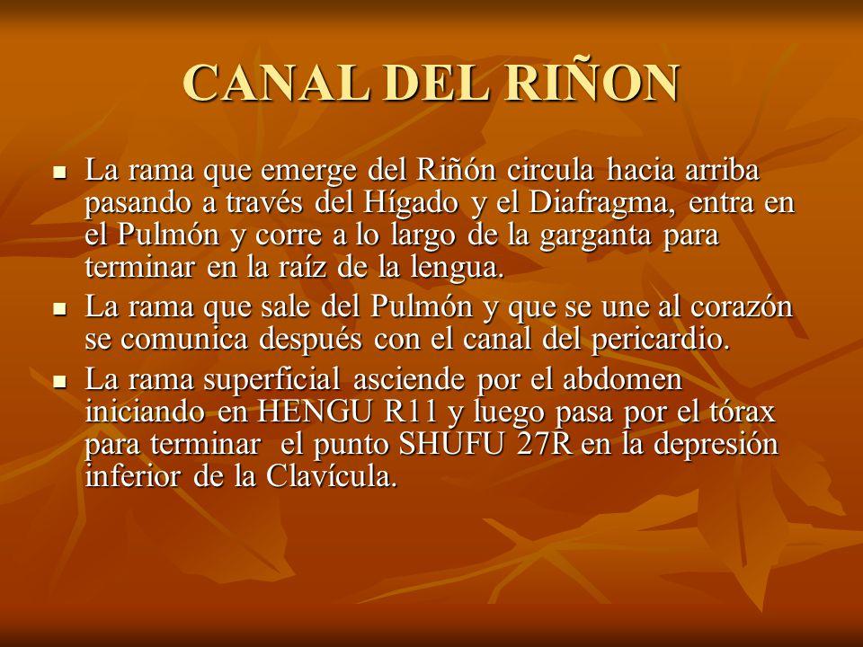 CANAL DEL RIÑON