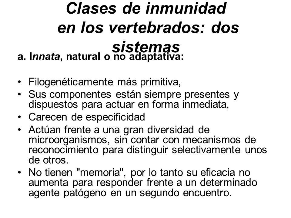 Clases de inmunidad en los vertebrados: dos sistemas