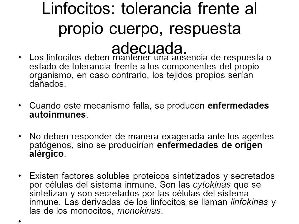 Linfocitos: tolerancia frente al propio cuerpo, respuesta adecuada.
