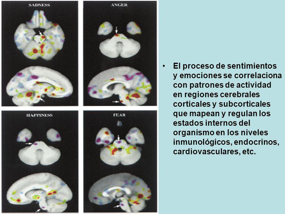 El proceso de sentimientos y emociones se correlaciona con patrones de actividad en regiones cerebrales corticales y subcorticales que mapean y regulan los estados internos del organismo en los niveles inmunológicos, endocrinos, cardiovasculares, etc.