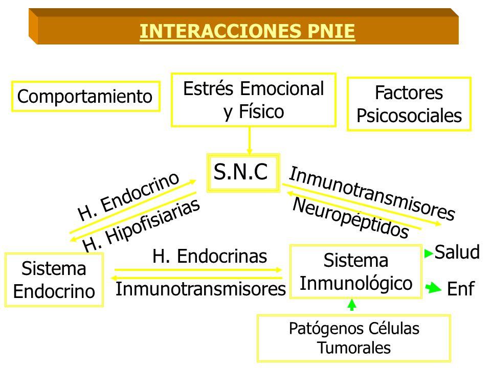 S.N.C INTERACCIONES PNIE Estrés Emocional y Físico