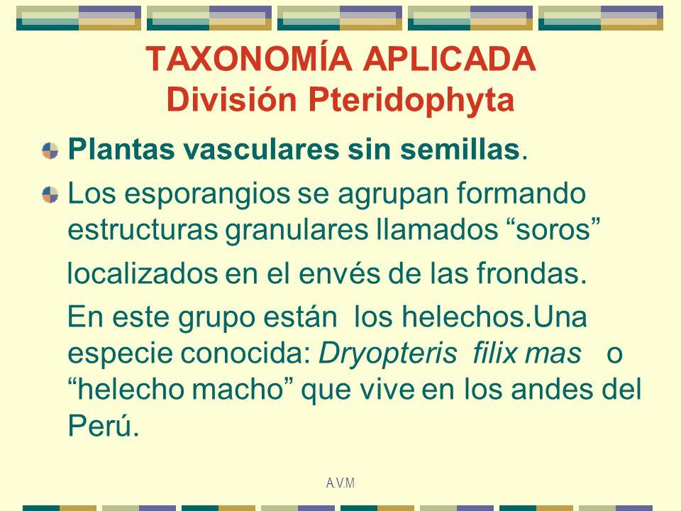 TAXONOMÍA APLICADA División Pteridophyta
