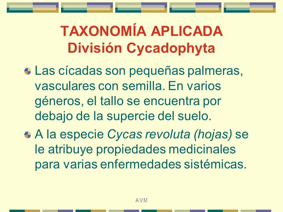 TAXONOMÍA APLICADA División Cycadophyta