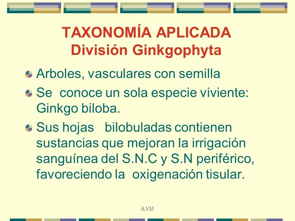 TAXONOMÍA APLICADA División Ginkgophyta