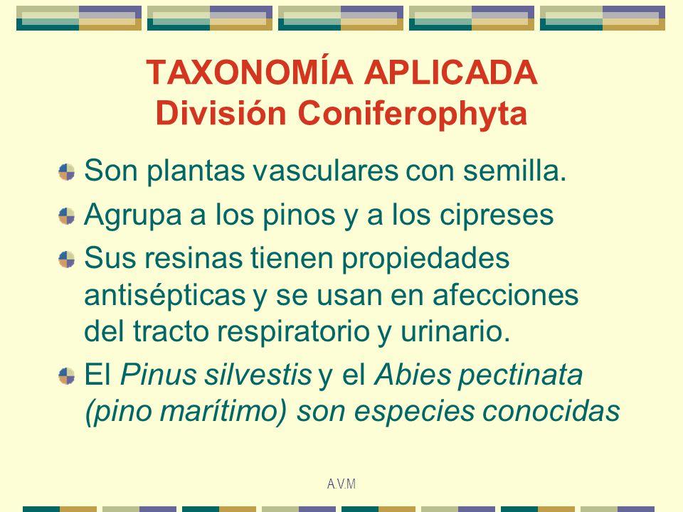 TAXONOMÍA APLICADA División Coniferophyta