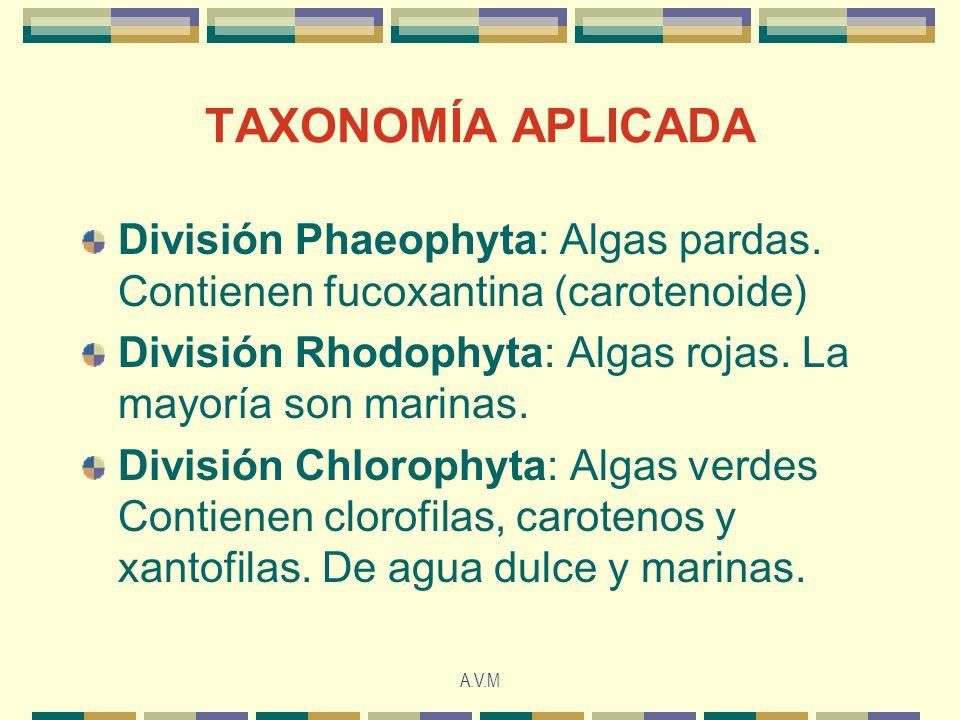 TAXONOMÍA APLICADA División Phaeophyta: Algas pardas. Contienen fucoxantina (carotenoide) División Rhodophyta: Algas rojas. La mayoría son marinas.