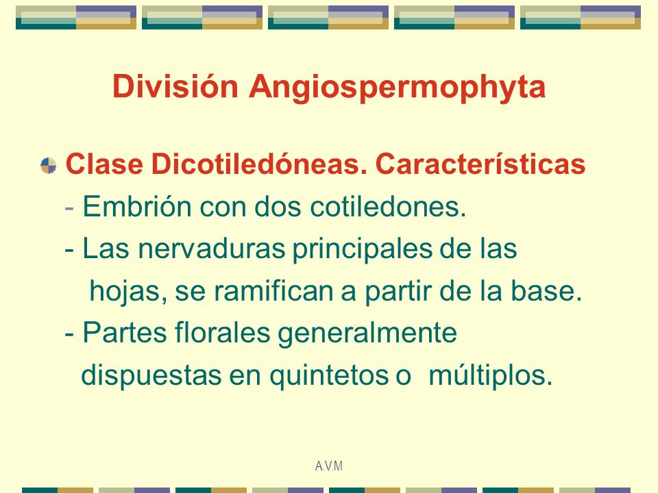 División Angiospermophyta