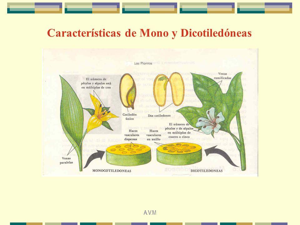 Características de Mono y Dicotiledóneas