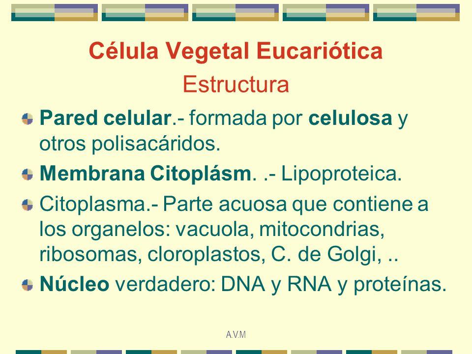 Célula Vegetal Eucariótica Estructura