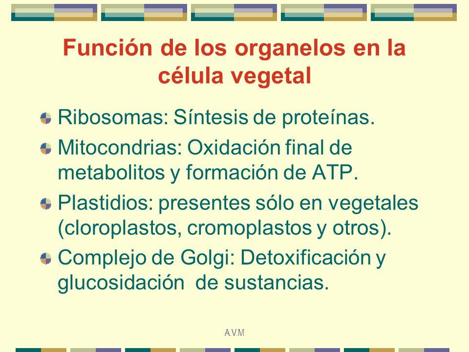 Función de los organelos en la célula vegetal