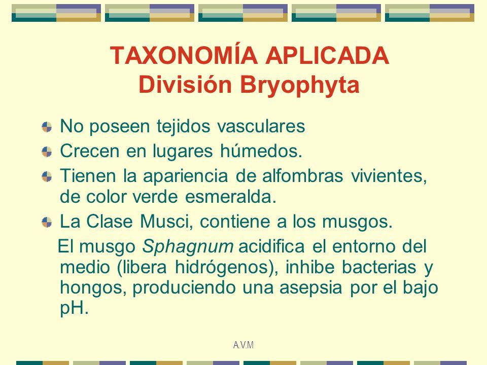 TAXONOMÍA APLICADA División Bryophyta