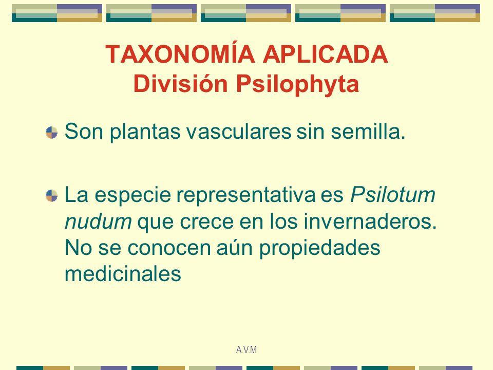 TAXONOMÍA APLICADA División Psilophyta