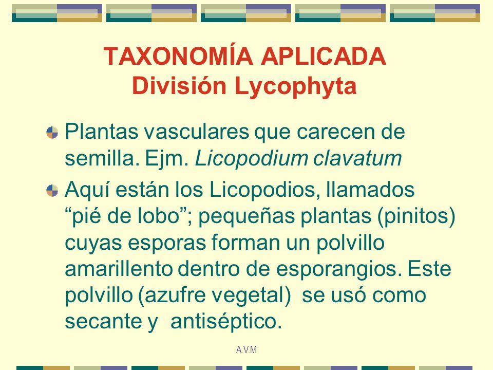 TAXONOMÍA APLICADA División Lycophyta