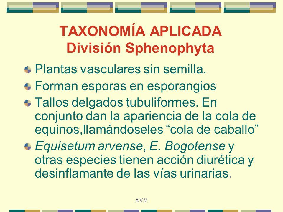 TAXONOMÍA APLICADA División Sphenophyta