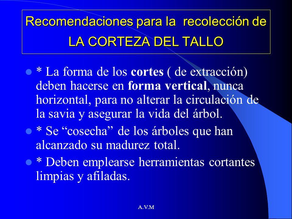Recomendaciones para la recolección de LA CORTEZA DEL TALLO