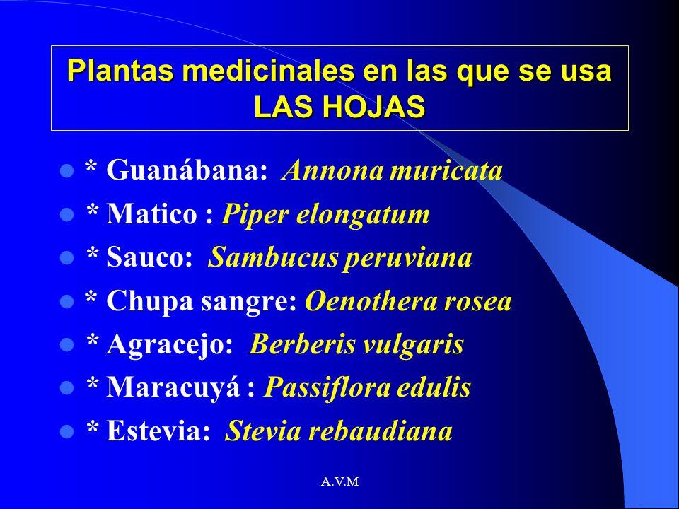 Plantas medicinales en las que se usa LAS HOJAS