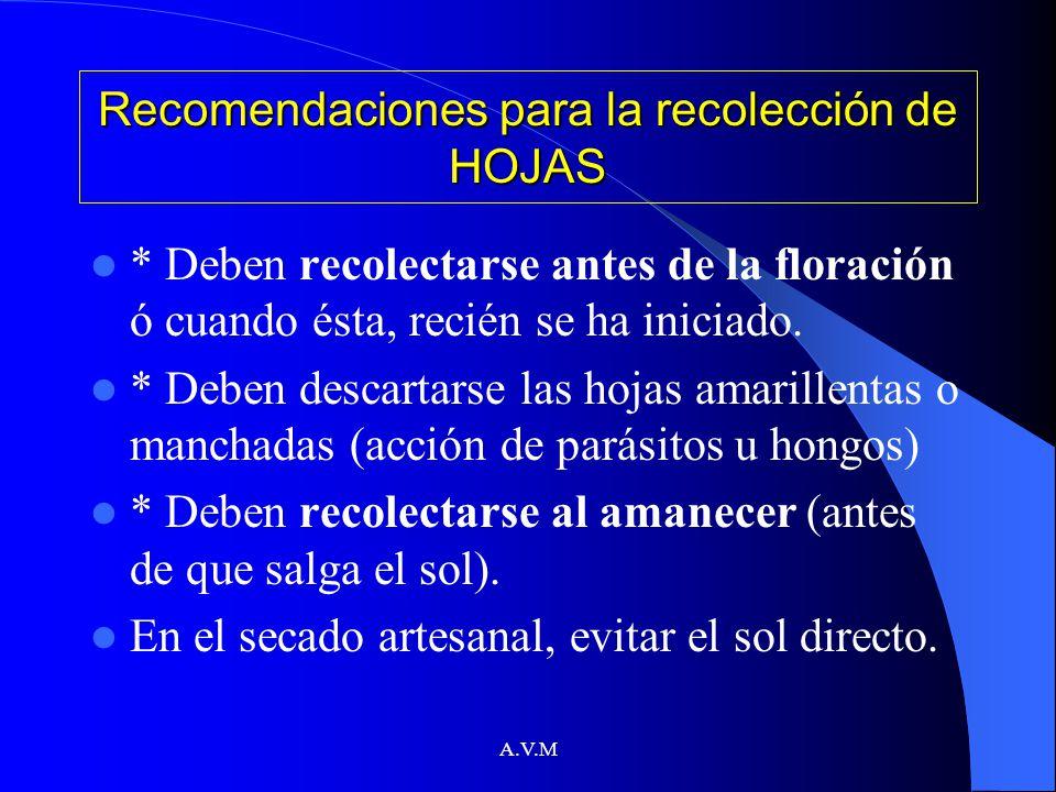 Recomendaciones para la recolección de HOJAS