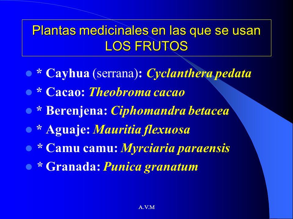 Plantas medicinales en las que se usan LOS FRUTOS
