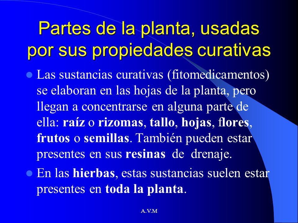 Partes de la planta, usadas por sus propiedades curativas