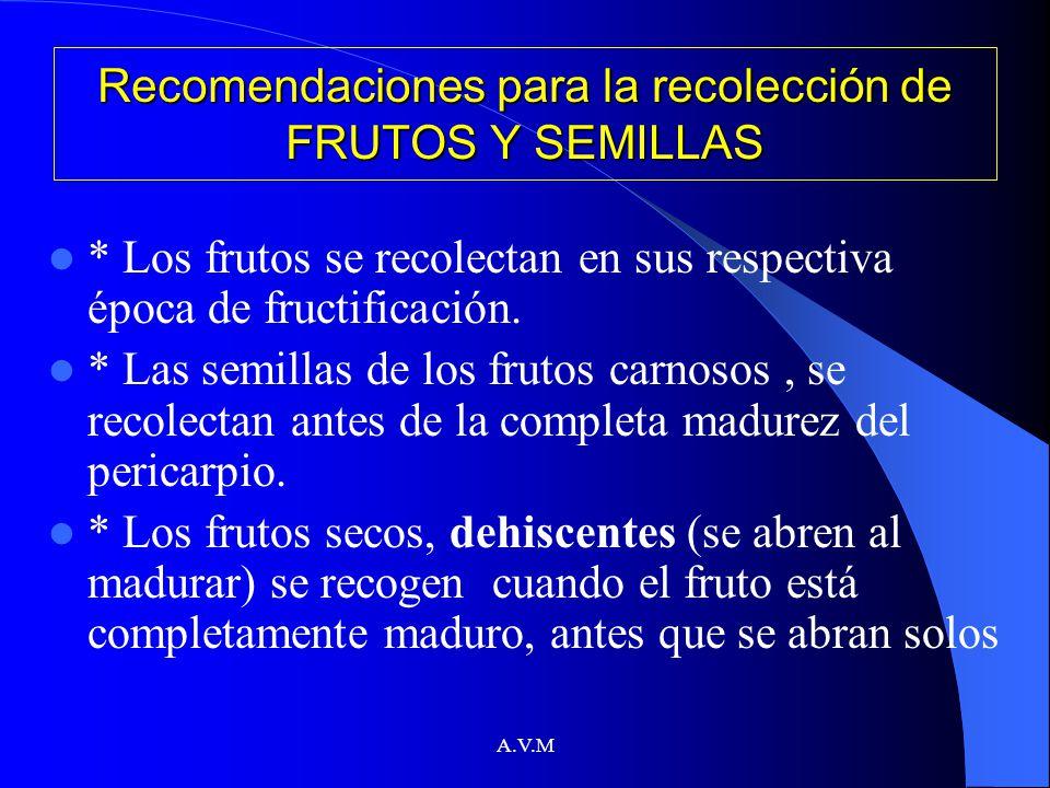 Recomendaciones para la recolección de FRUTOS Y SEMILLAS
