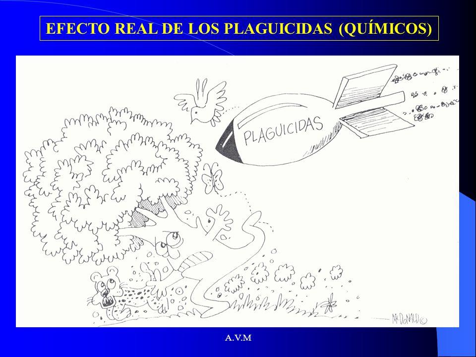 EFECTO REAL DE LOS PLAGUICIDAS (QUÍMICOS)