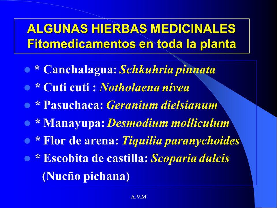 ALGUNAS HIERBAS MEDICINALES Fitomedicamentos en toda la planta