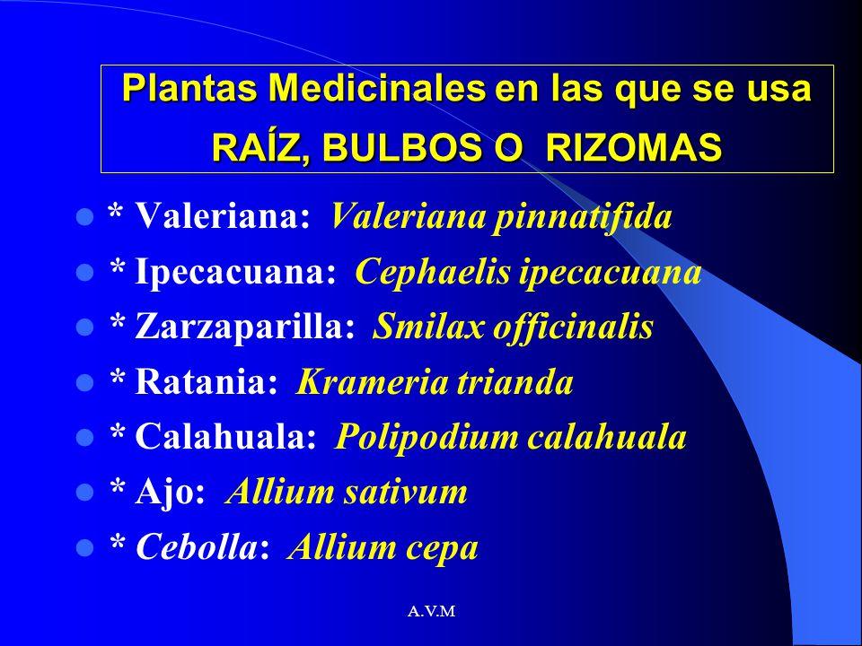 Plantas Medicinales en las que se usa RAÍZ, BULBOS O RIZOMAS
