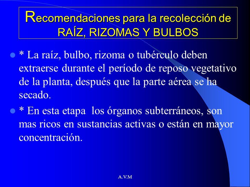 Recomendaciones para la recolección de RAÍZ, RIZOMAS Y BULBOS