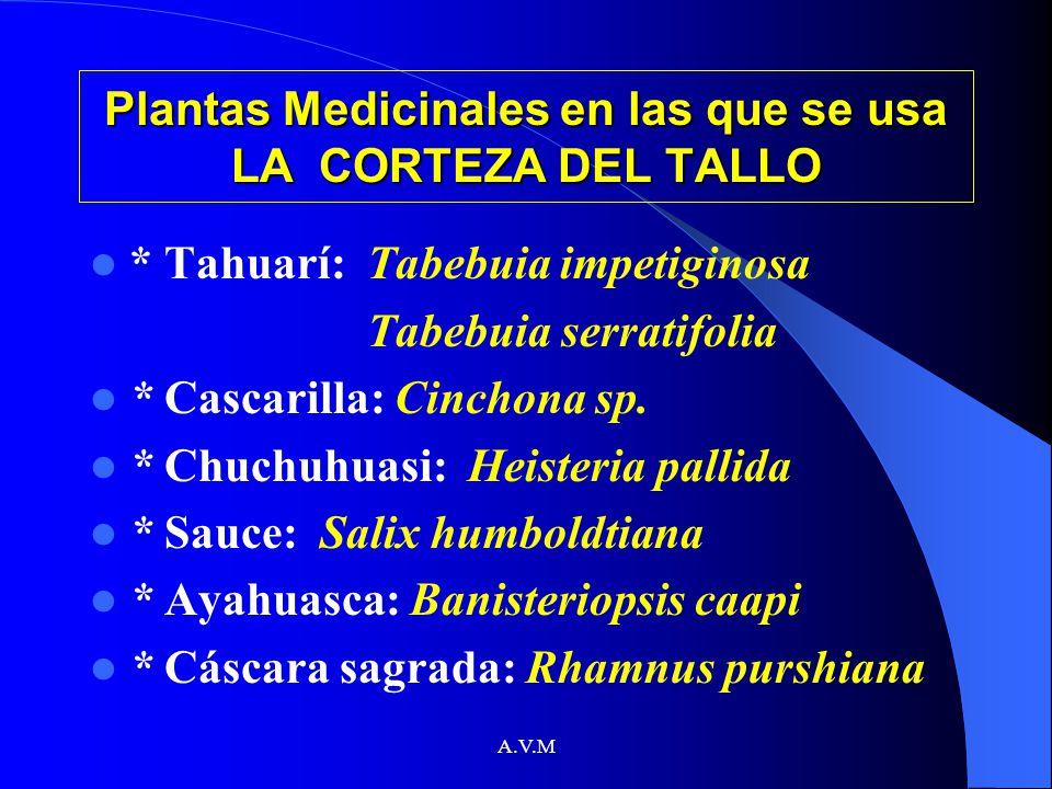 Plantas Medicinales en las que se usa LA CORTEZA DEL TALLO