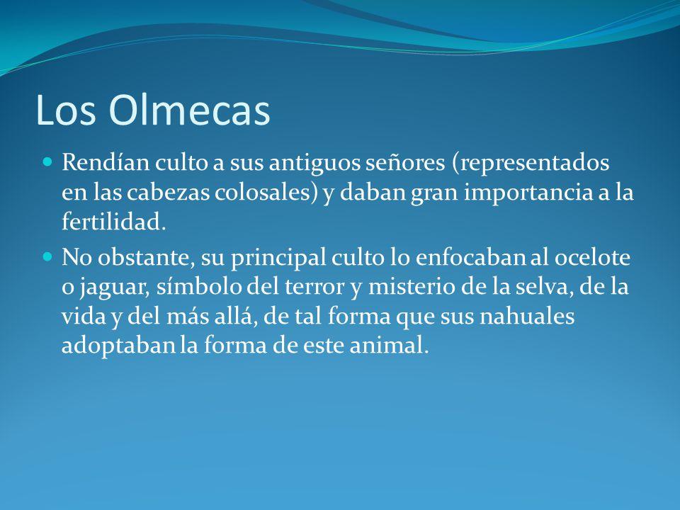 Los Olmecas Rendían culto a sus antiguos señores (representados en las cabezas colosales) y daban gran importancia a la fertilidad.