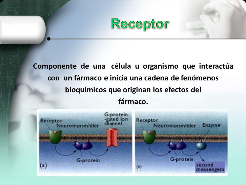 Receptor Componente de una célula u organismo que interactúa