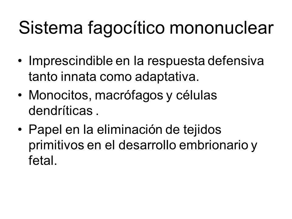 Sistema fagocítico mononuclear