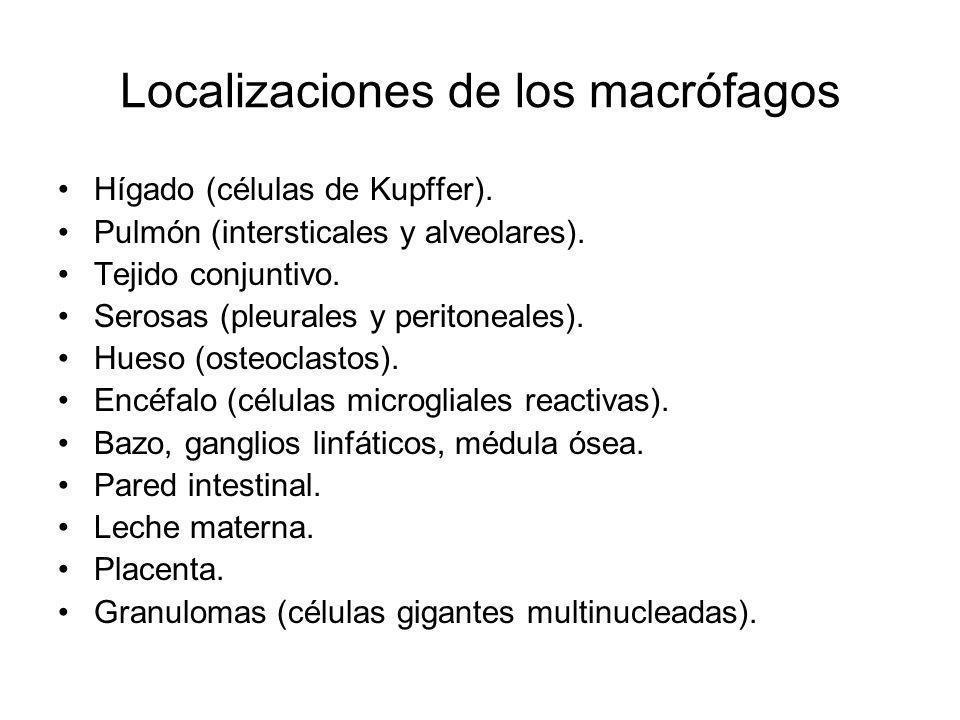 Localizaciones de los macrófagos