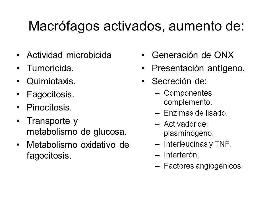 Macrófagos activados, aumento de: