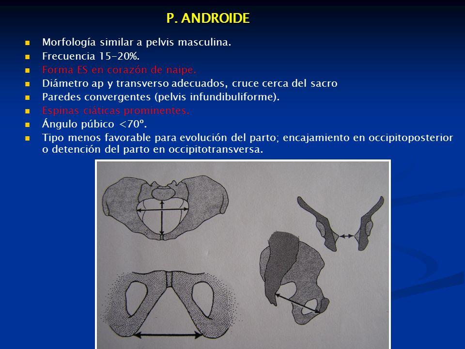 P. ANDROIDE Morfología similar a pelvis masculina. Frecuencia 15-20%.