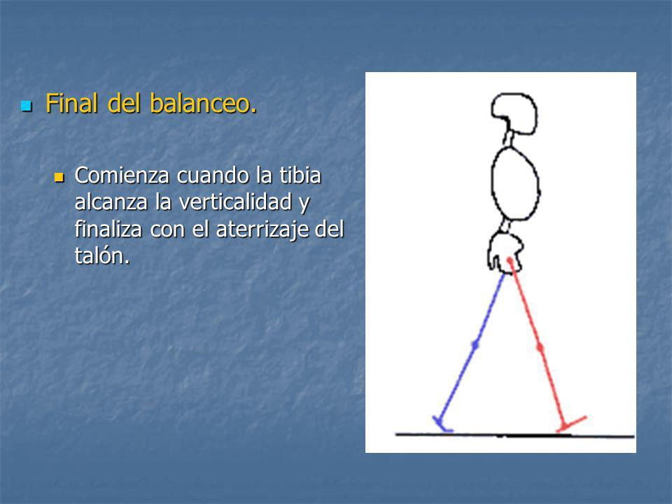 Final del balanceo. Comienza cuando la tibia alcanza la verticalidad y finaliza con el aterrizaje del talón.